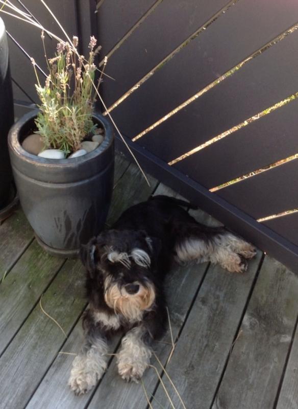 Rufus (Rufie)