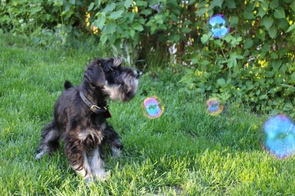 Freja jagar såpbubblor, forts...