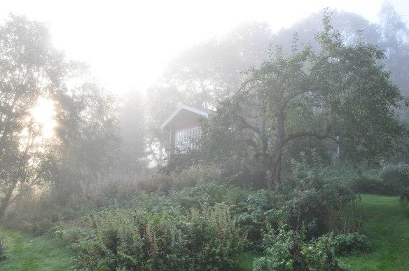 Natur min tradgard dimma