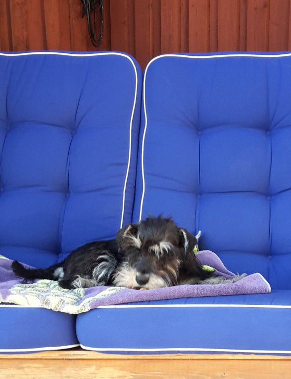 Ester i hammock redigerad