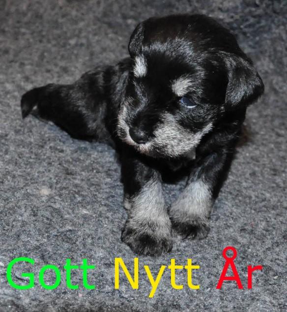 Gott Nytt Ar 2015