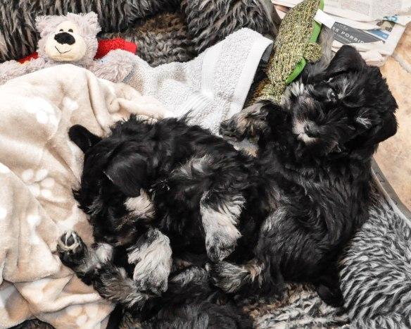 8v Frk Rod  Judy sover innan avfard t vanster