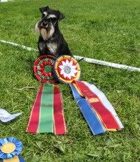 Itsi rosetter Nrk 2017 champion 5