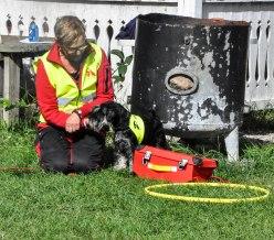 Kenneltraff 2017 lashund gunilla2