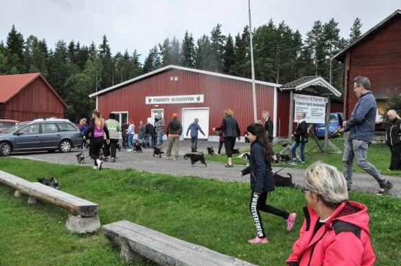 Kenneltraff 2017 skogsprom2