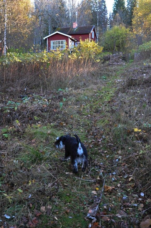 Ruf Hedda hostkvall vid brygga okt 2017 huset