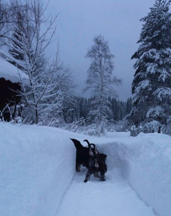 Ruf vinter sno jan 2017