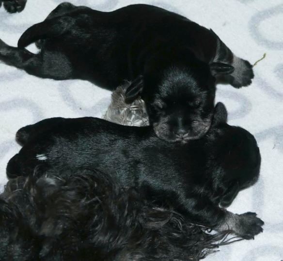 1v2dgr hanarna sover Heddas bakben2