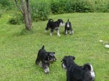 Syskontraff hund fyra