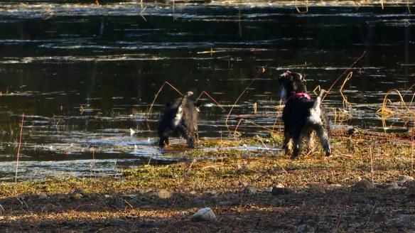 Kajsa o Hedda lek vid vatten5 20180911