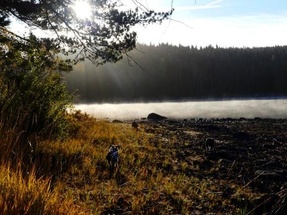 Natur hostmorgon hundar st lexen 20181006