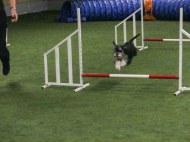 agility Morris 20181029