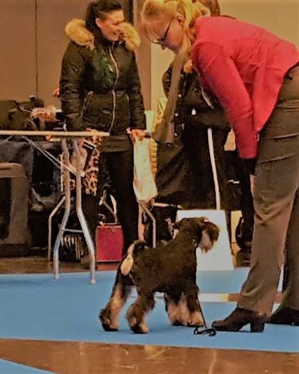 nicke birvalp my dog dag 1 2019 (2)