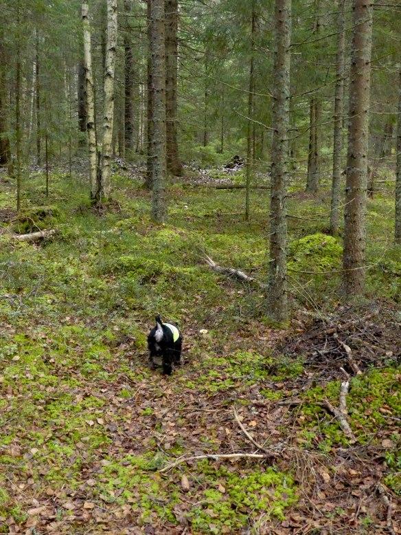 Lo i skog 20191105