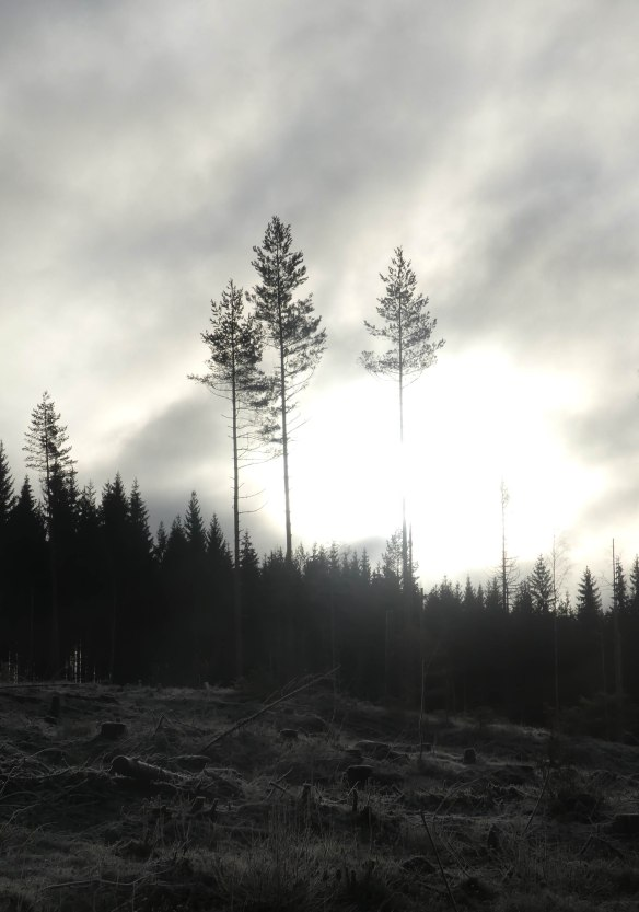 Natur kalhygge 20191105