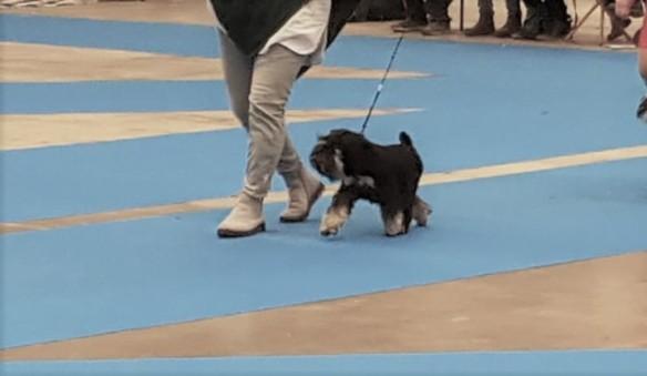 Lo My Dog 2019 (3)
