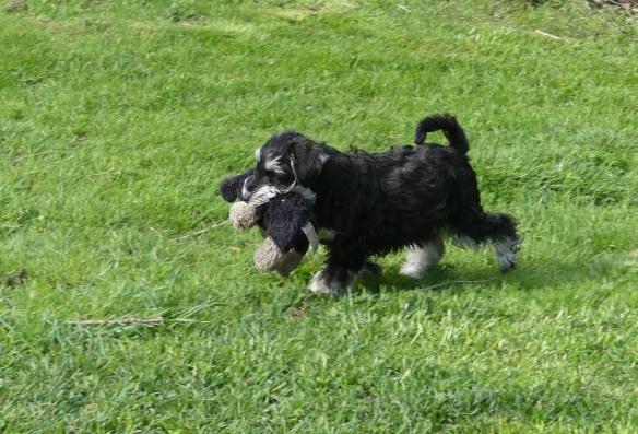 PerLa m sin leksakshund 20200528 (1 av 1)