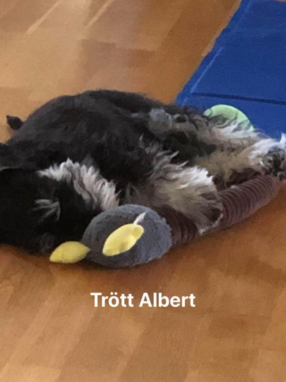 Albert sover m leksak juni 202