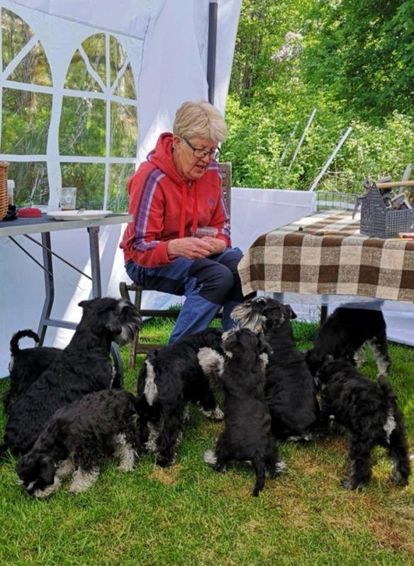 Valptraff 2 annette o alla hundar